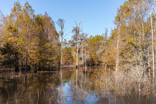 Bogalusa Homes for Sale - Photo 3