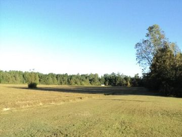 15 Acres N MASHON Road Independence, LA 70443