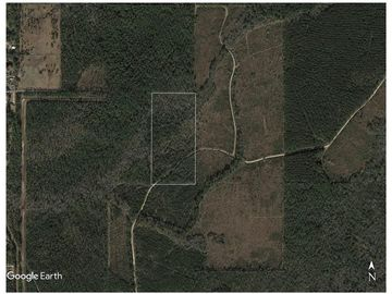 20.4 ACRES BTW HWY 36 AND HWY 59 Abita Springs, LA 70420