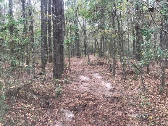 5.818 Acres JIM TALLEY Road - Photo 3
